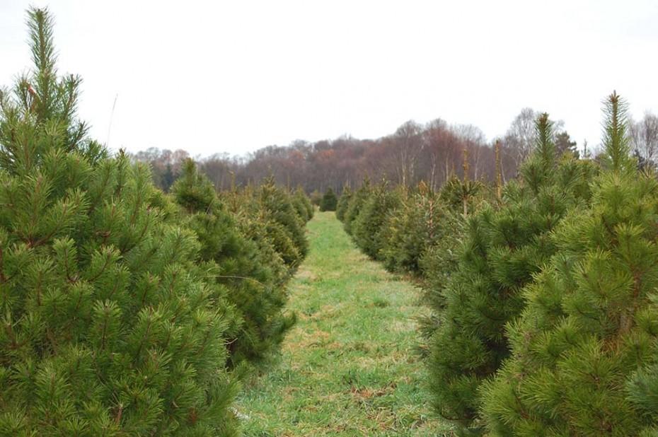 Meadow Lane Christmas Tree Far