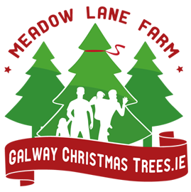 About us galway christmas trees galway christmas trees solutioingenieria Choice Image